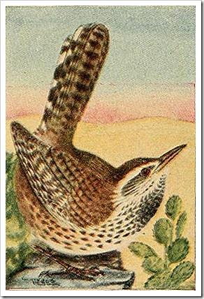 1 wren birdguide00reed_0190