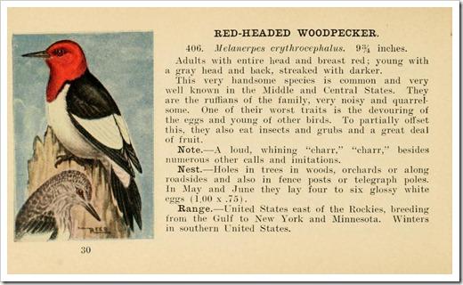 birdguide00reed_0036