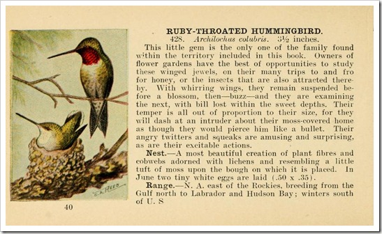 birdguide00reed_0046