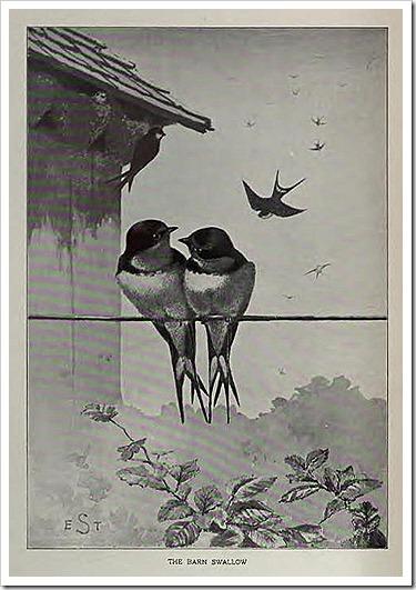 birdportraits00hoffgoog_0027