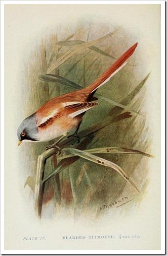 britishbirds00huds_0120