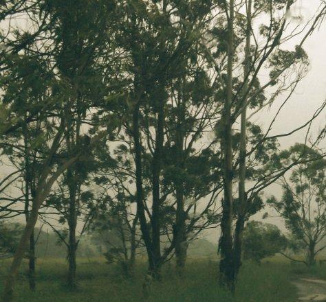 z DSCF7690 wet trees