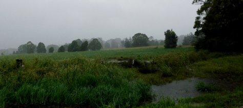 z DSCF7783 rain