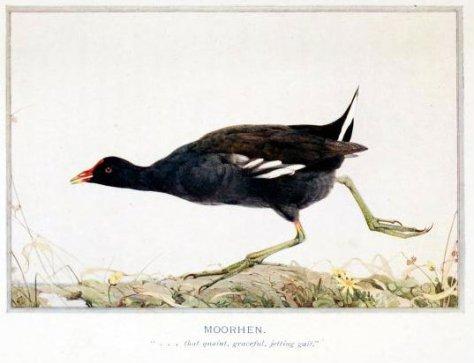1 A birdsintownvil00huds_0227