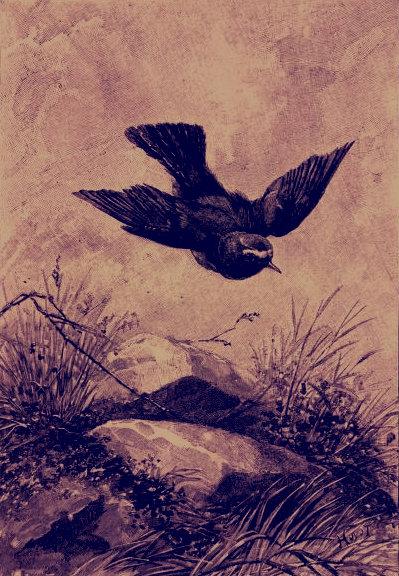 Z withbirdsselecte00munruoft_0069