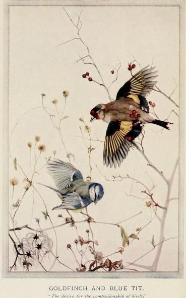 1 1 birdsintownvil00huds_0008