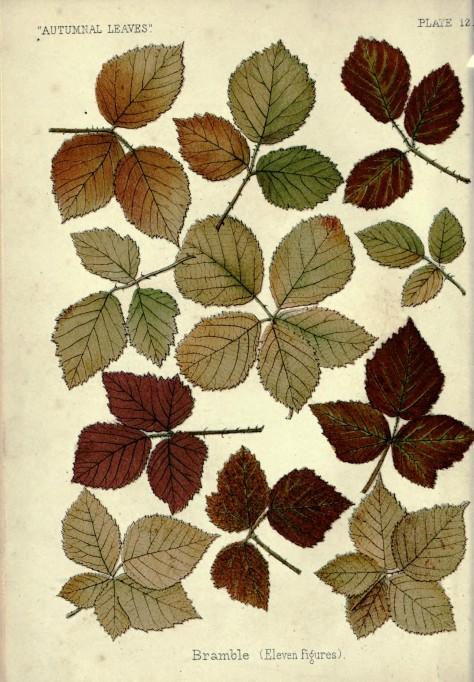 1 1 autumnalleaves00heatrich_0008