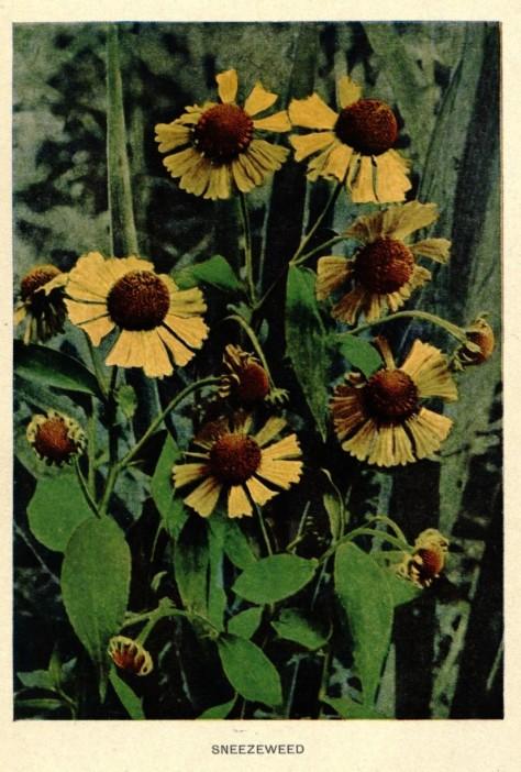 1 1 autumnflowersfru10macb_0008