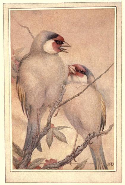 1 1 1 birdsbeasts00lemoiala_0070