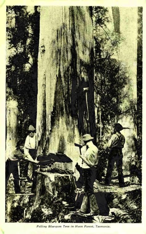 1 1 1 australianscenes00austrich_0081
