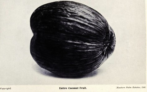1 1 1 1 allaboutcoconuts00belfrich_0077