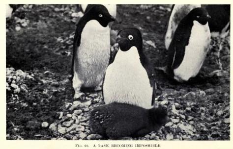 1 1 1 1 antarcticpeng00leviiala_0197