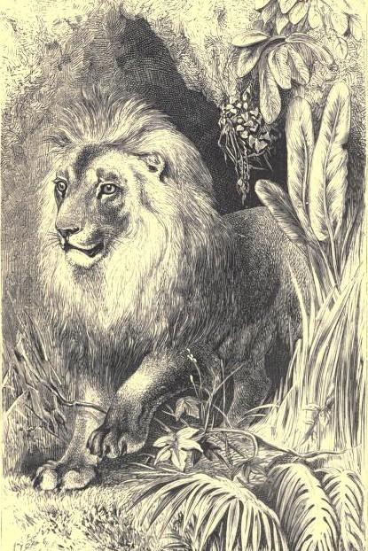 z z z lionelephant00andeiala_0010