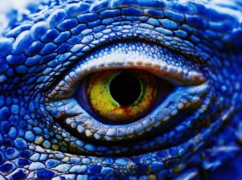 z z z z Understanding_Close-Up_Photography_0011