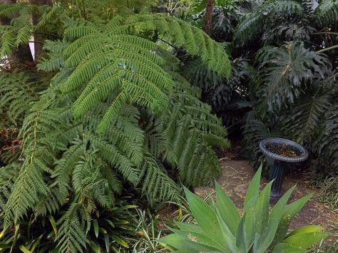 1 ferns DSCF9389