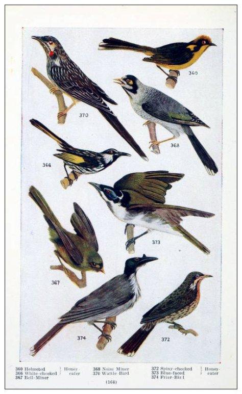 2 australianbirdbo00leac_0172