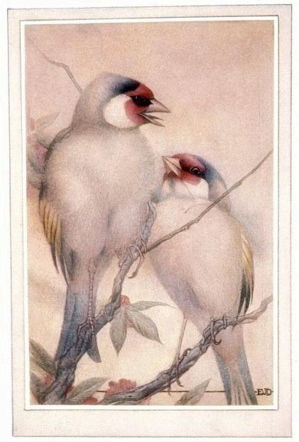 2 birdsbeasts00lemoiala_0070