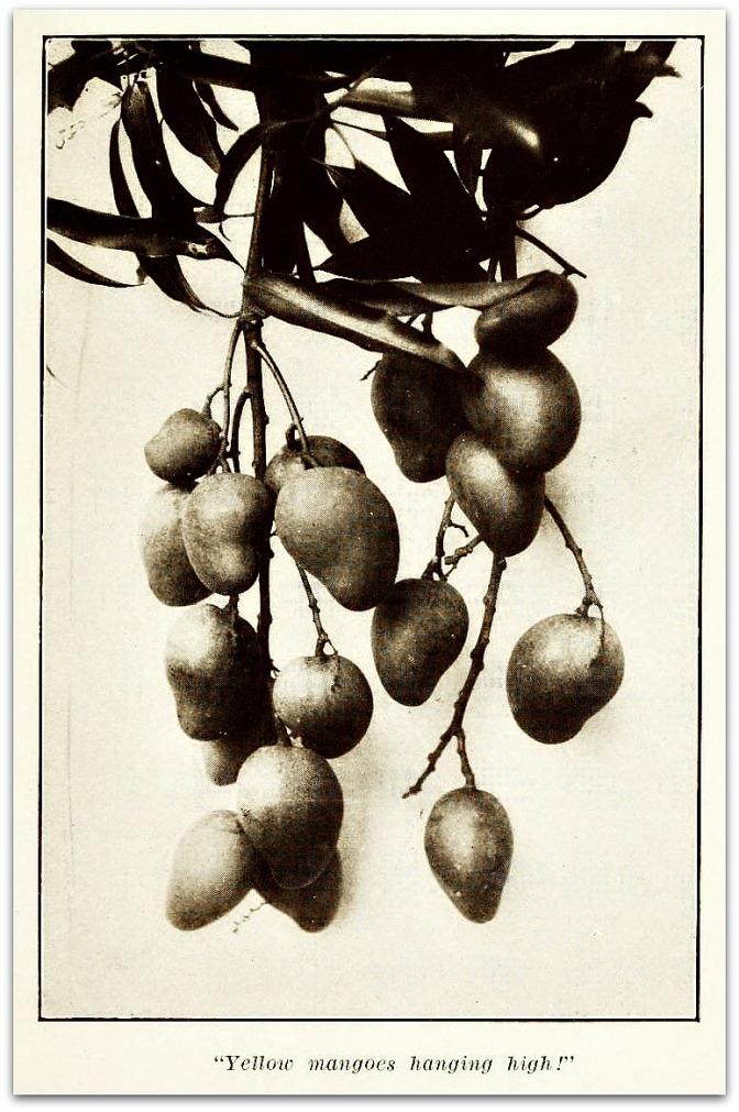 A ripe mango has to be eaten slowly.