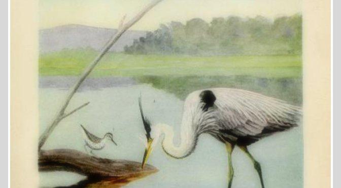 He kotuku rerenga tahi  A White heron flies once
