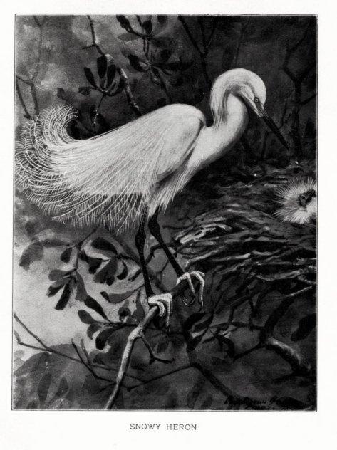 0 grayladybirdssto00wrigrich_0101