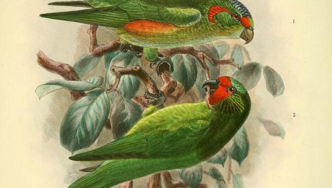 Bonny feathers dinna aye mak' bonny birds.