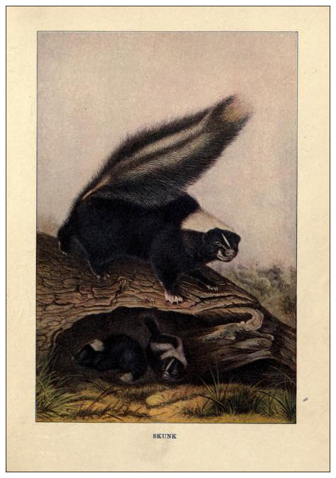 """One thing about a skunk – once you recognize the markings, you know things are gonna stink.""  ― Richelle E. Goodrich"