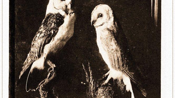An ass is the gravest beast, an owl the gravest bird.