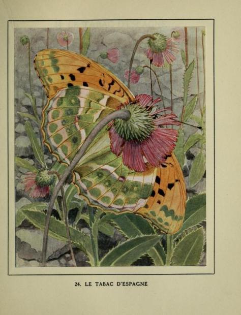 lespapillonsdans01robe_0163