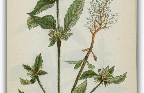 David Scheid; A man of words and not deeds, Is like a garden full of weeds.