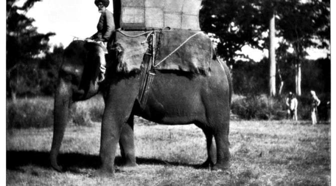 D.H. (David Herbert) Lawrence : So slowly the hot elephant hearts grow full of desire, and the great beasts mate in secret at last, hiding their fire.
