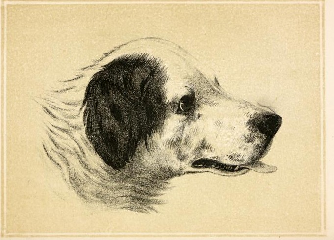 Dogs act exactly the way we would act if we had no shame. Cynthia Heimel