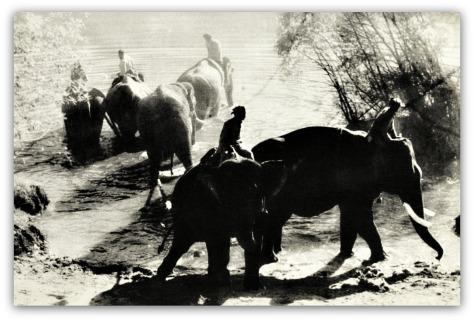 0 elephantdance00fran_0137