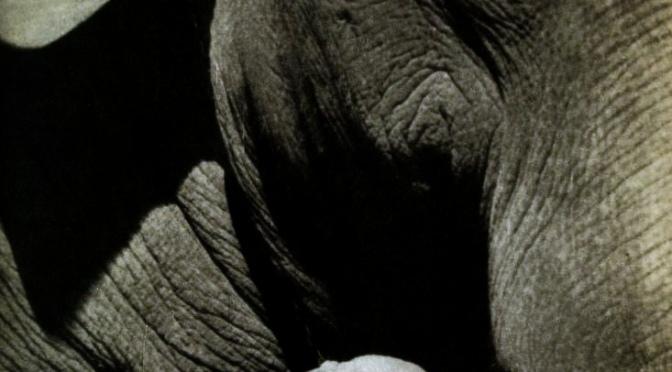 Elephants do not beat each other. Ethiopia.