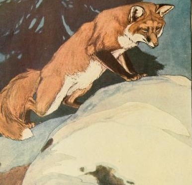 Little fox, come down from your burrow in the mountains, Hurry along the reed-tracks twisting by the river, Leave the bones white as mist in the valley. Geoffrey Dutton.