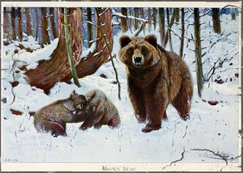 1 1 1 1 wildlifeofworldd01lydeuoft_0583