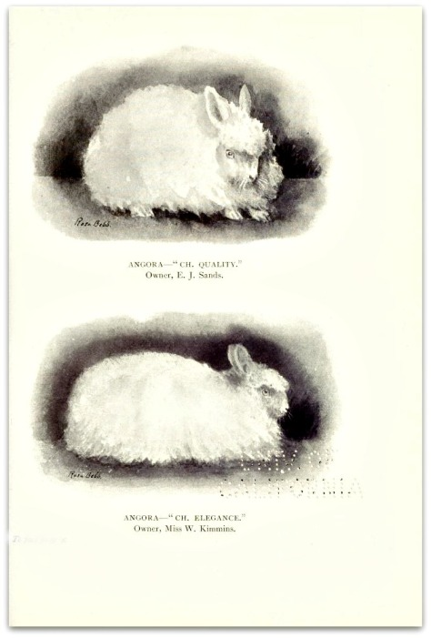 0 0 rabbitscatscavie00lanerich_0141