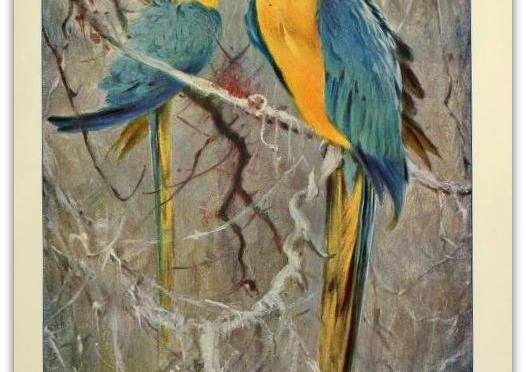 We take along a carrot As refreshment for the parrot, And a little can of jungleberry tea. Charles Edward Carryl (1841-1920)