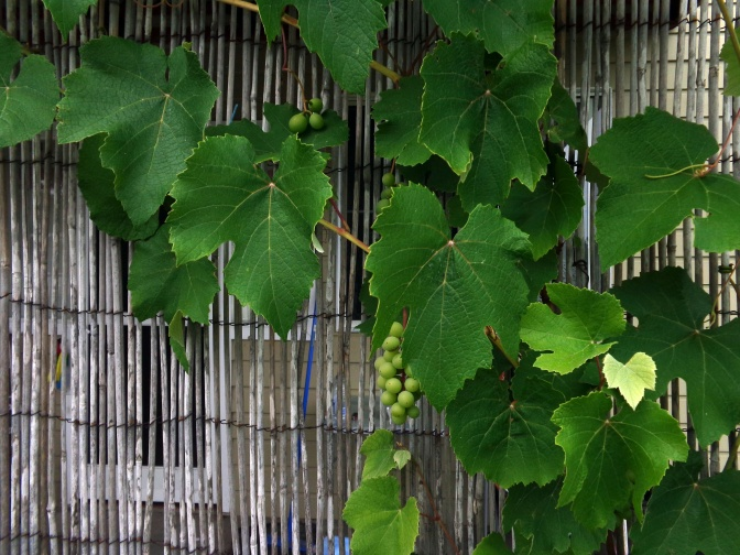 The sweetest grapes hang highest.